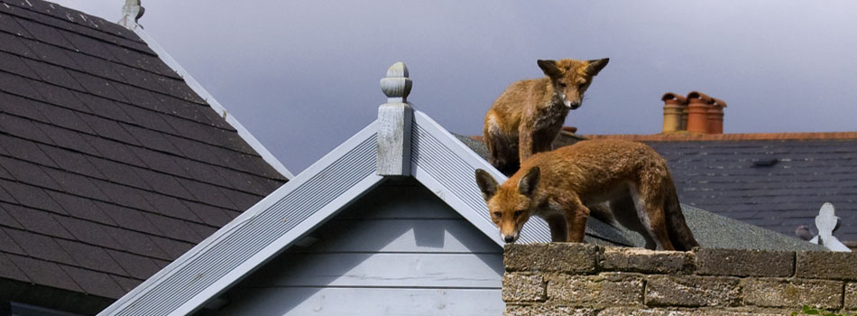 fox control from Stratford Pest Control